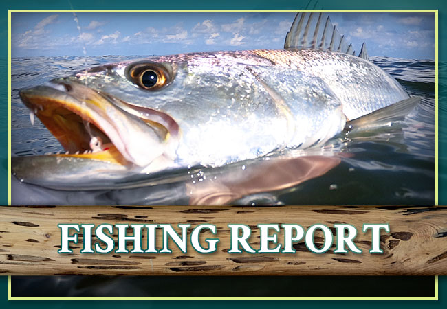 Bourgeois Fishing Charters Fishing Report